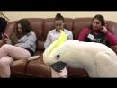 Попугай Даниссимо читает реп и ходит по владениям