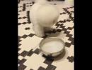 Собачка играет с дымом
