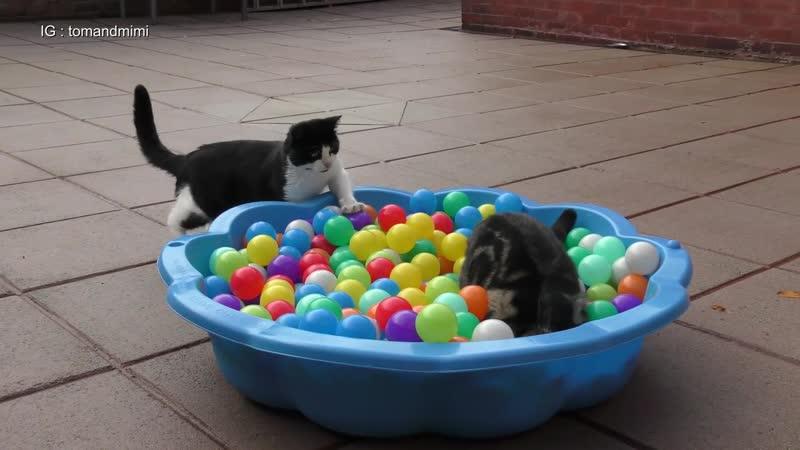Пиздиться за шарики весомый аргумент