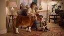 Pferd Commercial 2015