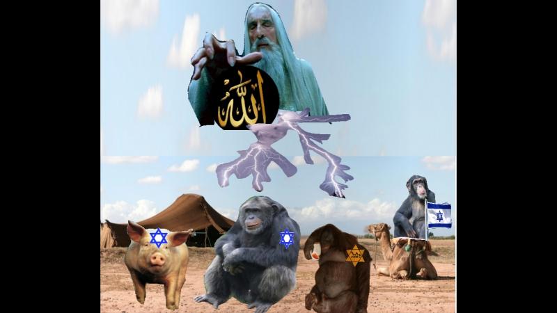 Allah verwandelte Juden in Affen und Schweine-Laut Koran