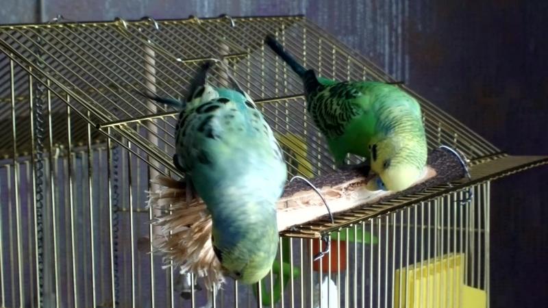 Увлекательная игрушка для попугаев из леса. Бесплатно, без регистрации и СМС