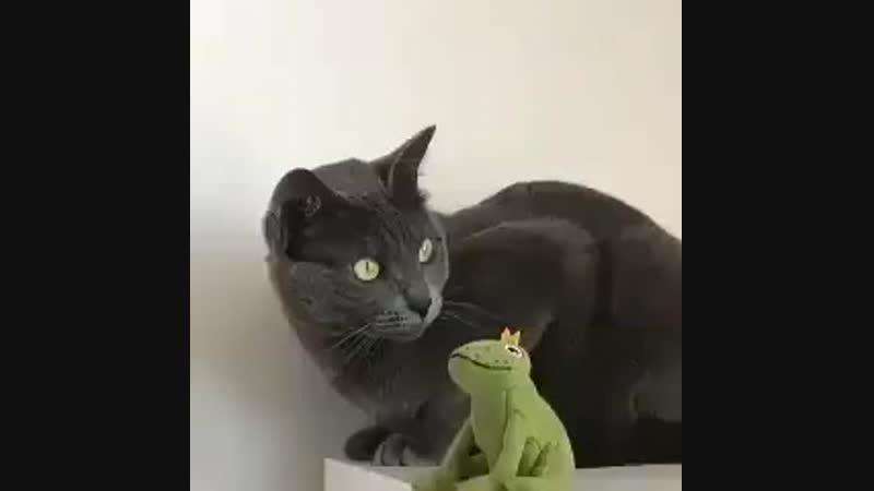 Gue demend bgt liat kucing ini..!!