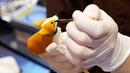 JAPANESE CANDY LOLLIPOPS - Dog, Bird, Beetle, Monkey AMEZAIKU YOSHIHARA Tokyo Japan