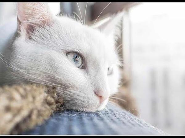 Жизнь глазами белого кота