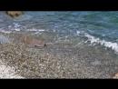 Питы щарс - Чёрное море