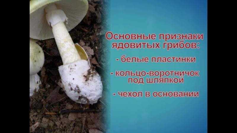 ПРофилактика отравления грибами