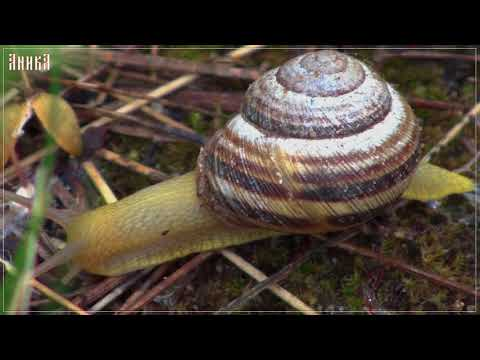 Заставки. Улитки (Screensavers.Snails). Макросъемка (Macro photography)