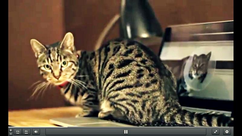Руководство для котов по уходу за человеком!
