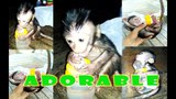 THE CUTEST MONKEY YOU HAVE EVER SEEN - Cute Baby Monkey Video