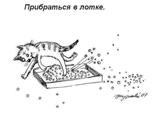 m wmsJsPO k - Как правильно мыть котейку