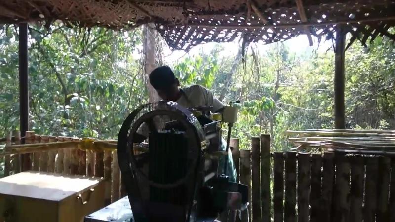 бамбуковый сок