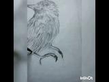 Птица. Карандаш