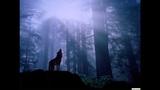 Oh Land - Wolf &amp I (Kaminanda Remix)