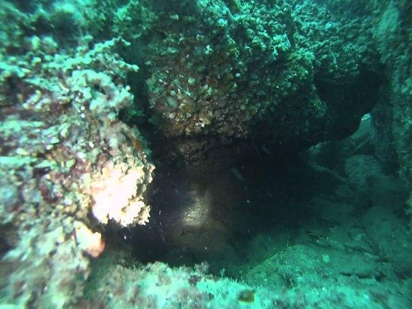 Подводная охота на черном море 18.8 метров зачетный горбыль в домике.