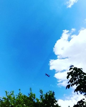 Irin_iris video