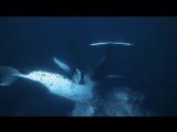 Красивые и загадочные киты