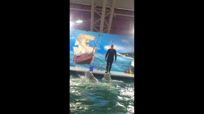 """Дельфинарий Шоу Белых Китов """"танец"""""""