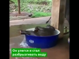В Таиланде сняты кадры, как слоненок принимает ванну
