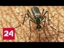 Вирус от которого нет вакцины распространяется по миру Россия 24