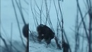 Мысковчанин искал закладку в Междуреченске