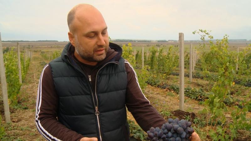 Бизнес на селе 33. Как обычный парень виноградную долину в Татарстане создал