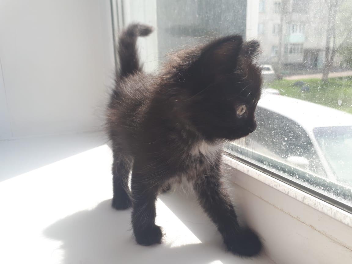 Отдам последнего котенка)
