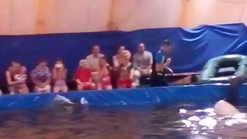 Дельфинарий в Петрозаводске