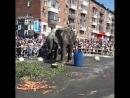 Итальянский Цирк Слоны и Тигры Ижевск