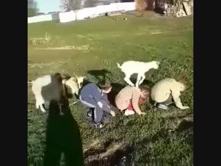 Кәзә һәм балалар