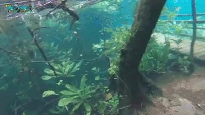 Подводные тропики в Бразилии после затопления кристально чистой водой