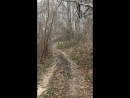 Звуки природы на конной прогулке