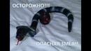Змея на пульте управления. Классная игрушка для взрослых и детей/AliExpress