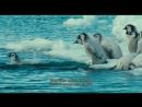 «Птицы 2: Путешествие на край света (Марш пингвинов)» (Документальный, семейный, природа, 2005)