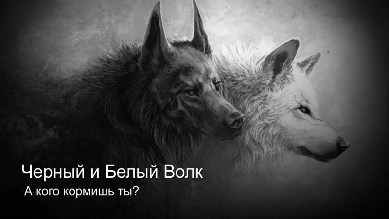 V и Белый Волк mp4