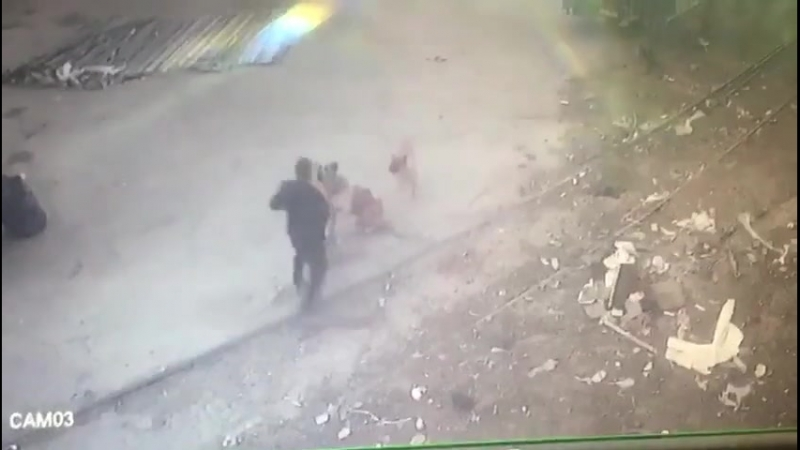 Вломил собакам