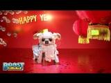 LEGO Boost  - Год Собаки