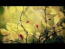 Равнодушная осень - Indifferent autumn