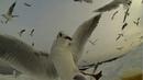 замедленный полет птиц, чаек
