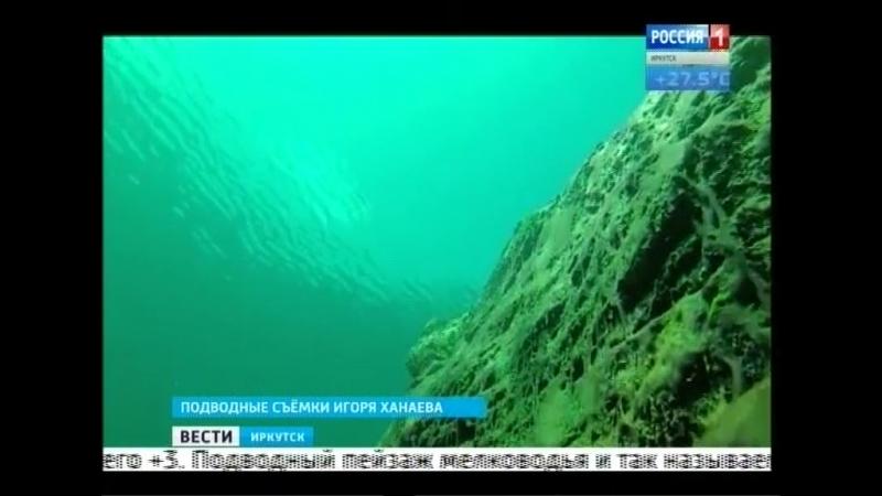 Шокирующие кадры. Сине-зелёные водоросли оккупировали дно Байкала