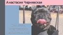 Ветеринарный врач реабилитолог Анастасия Чернявская для WAVM