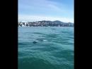 Дельфины устроили настоящее шоу в открытом море.