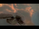 полёт совы из Легенды ночных стражей