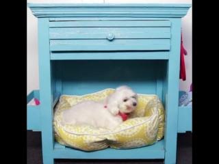Место для собаки из старой мебели _ Умный Дом _