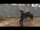 катаемся на лошадках