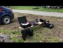 работа поисковой собаки Муха на квесте по поиску пропавших детей