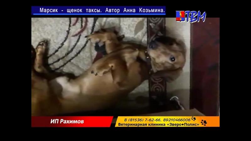 Конкурс видеороликов «Человек собаке друг».Спонсоры -ветеринарная клиника «Зверополис» и магазин элитных кормов ИП Рахимов