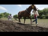 Фестиваль «Я – русский крестьянин» прошел в Волоконовском районе
