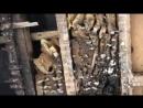 Колония из 60 000 пчел захватила британскую больницу