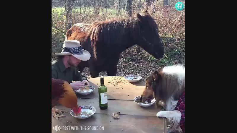Мужик обедает с животными.mp4